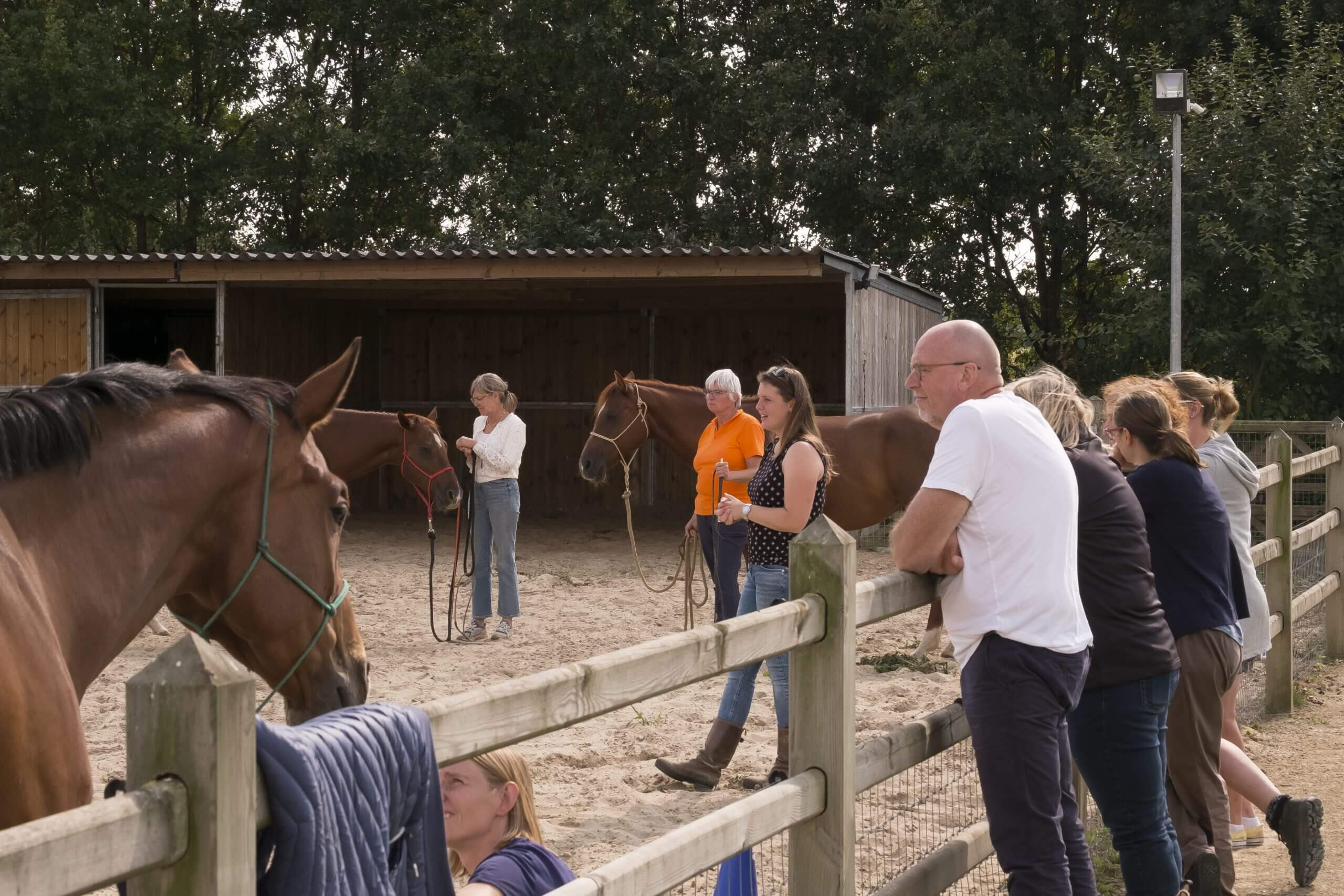 workshops natural horsemanship