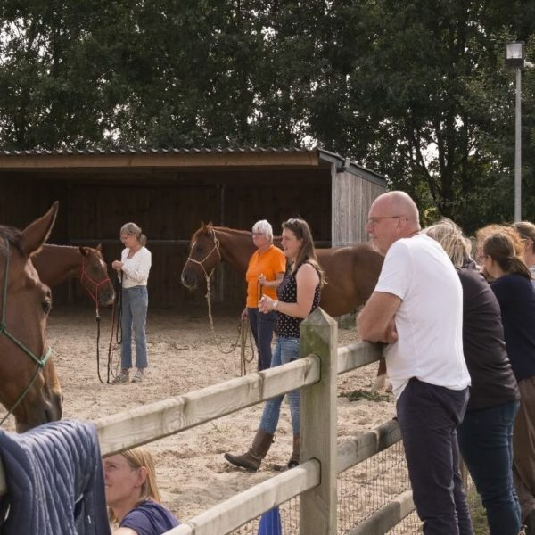 Coaching horsemanship - jaartraining