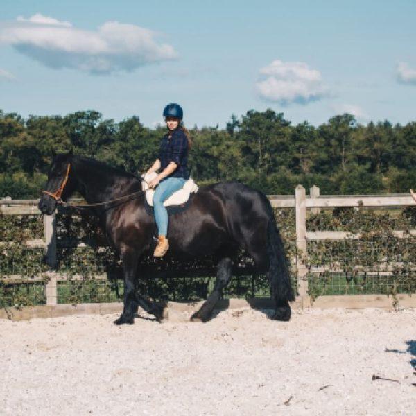 leervakantie natrual horsemanship